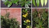 گونه های گیاهی