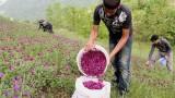 مزرعه گیاهان دارویی