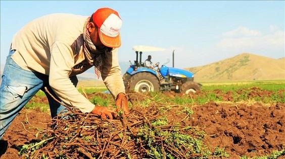 افزایش ۱۰۹ درصدی صادرات شیرین بیان از استان فارس