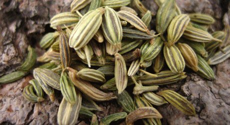 تولیدکنندگان بذر گیاهان دارویی حمایت می شوند