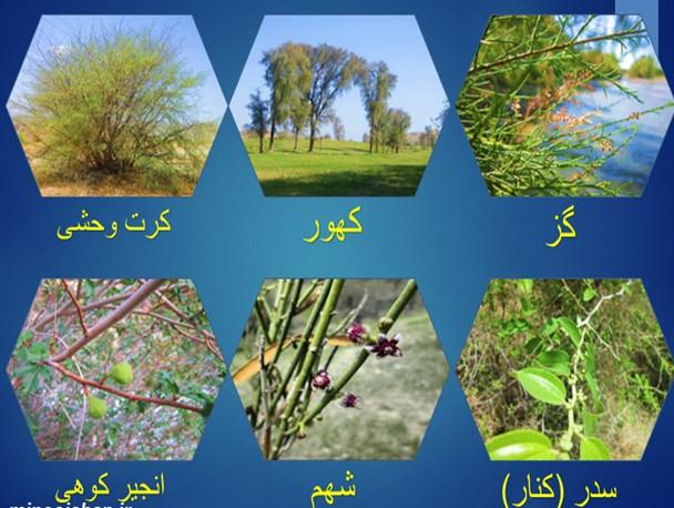 ۴۵۰ گونه گیاه دارویی در اردبیل شناسایی شد