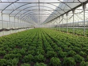 شهرک گلخانه ای گیاهان دارویی در استان گلستان احداث می شود