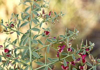 ۹ میلیون هکتار از مراتع کشور به توسعه و کاشت گیاهان دارویی اختصاص مییابد