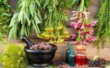 مشاور وزیر جهاد کشاورزی در گفتگو با ایانا مطرح کرد: تولید بیش از ۲۹۰ هزار تن گیاهان دارویی در کشور