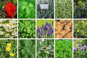 مجری طرح توسعه گیاهان دارویی سازمان جهاد کشاورزی کردستان خبر داد؛ تولید چهار هزار و ۵۰۰ تن فرآورده های گیاهی در کردستان