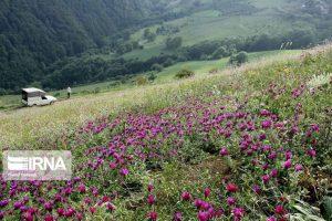 سالانه افزون بر ۲ هزار تن گیاه دارویی در اصفهان تولید میشود.