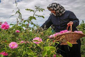 رئیس جهاد کشاورزی استان سمنان خبر داد؛ توسعه باغات و گیاهان دارویی در اراضی شیبدار استان سمنان