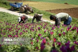احیای رویشگاه های گیاهان دارویی در مازندران