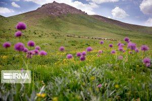 بذرکاری ۲ هزار و ۵۰۰ هکتار عرصه مرتعی استان مرکزی هدفگذاری شد.