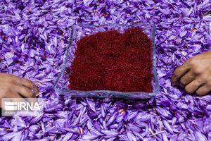 مدیرکل دفتر هماهنگی توسعه صادرات سازمان توسعه تجارت مطرح کرد: صادرات ۴۹ میلیون دلاری گل و گیاه خوراکی در بهار ۱۴۰۰