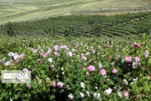 سامانه بازارگاه گیاهان دارویی در خوزستان راهاندازی شد.
